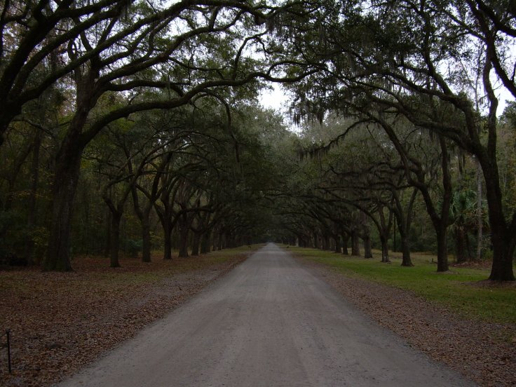 Road to Wormsloe Plantation