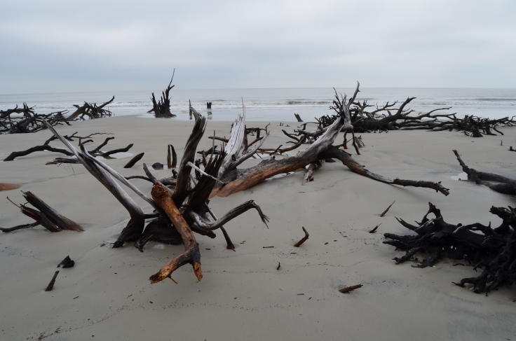 Cabretta Beach - Sapelo Island